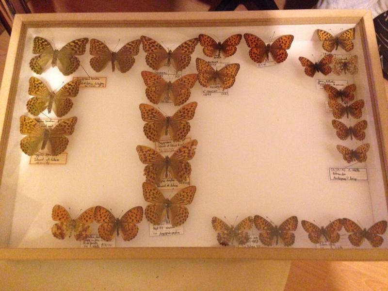 Présentation des collections Entomologiques - Page 7 Img_0432