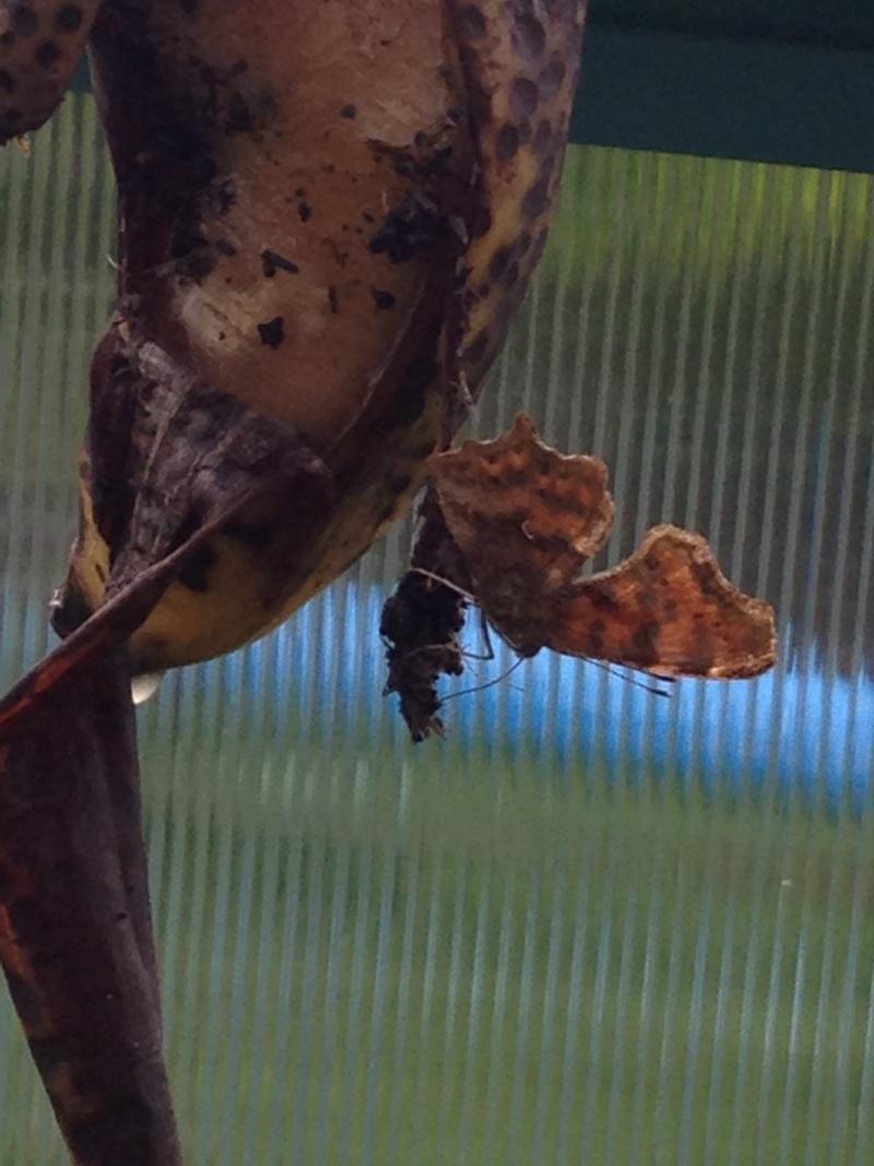 Serre à papillons. - Page 2 Img_0514