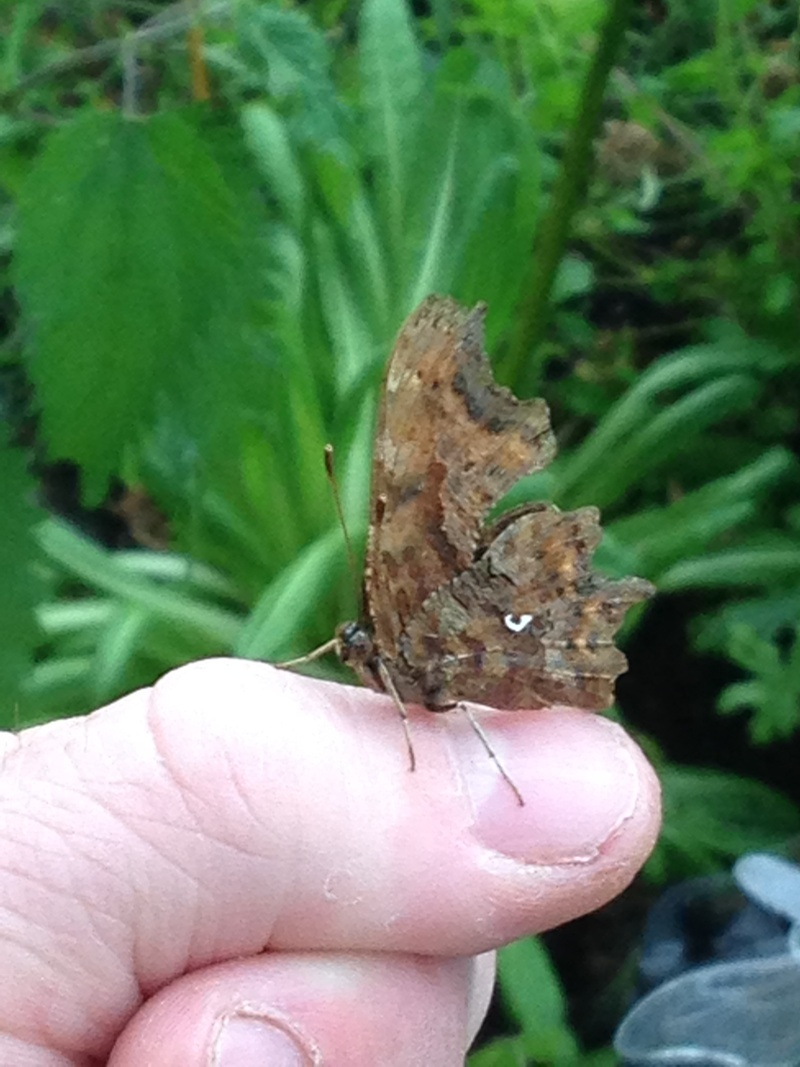 Serre à papillons. - Page 2 Img_0518
