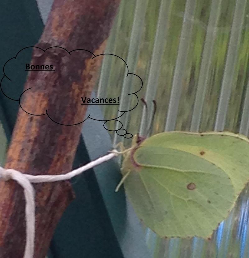 Serre à papillons. - Page 2 Img_0519
