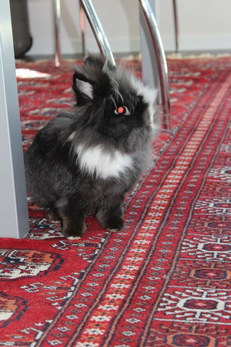 un lapin...?  - Page 3 Img_7310
