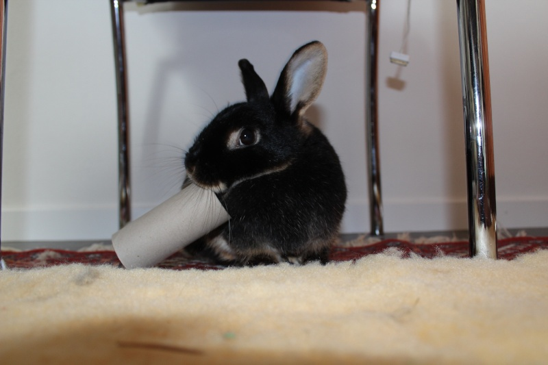 un lapin...?  - Page 3 Img_7610
