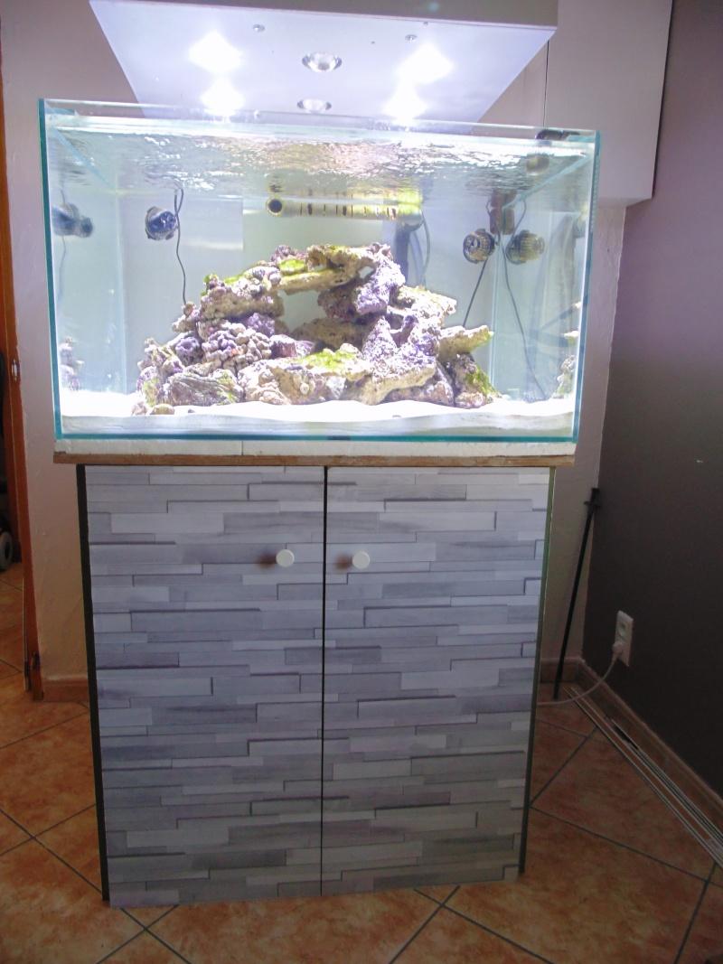 mon nouvel aquarium  - Page 3 Dsc05714