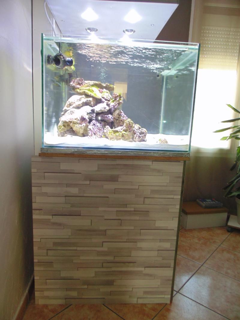 mon nouvel aquarium  - Page 3 Dsc05715