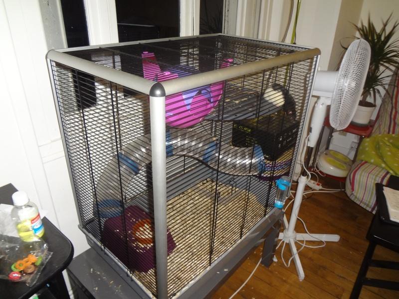 [Orléans] Vend cage Ferplast Chinchilla KD Dsc00811