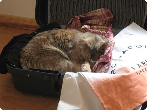 Images du jour sur les chats - Page 3 Mic_va10