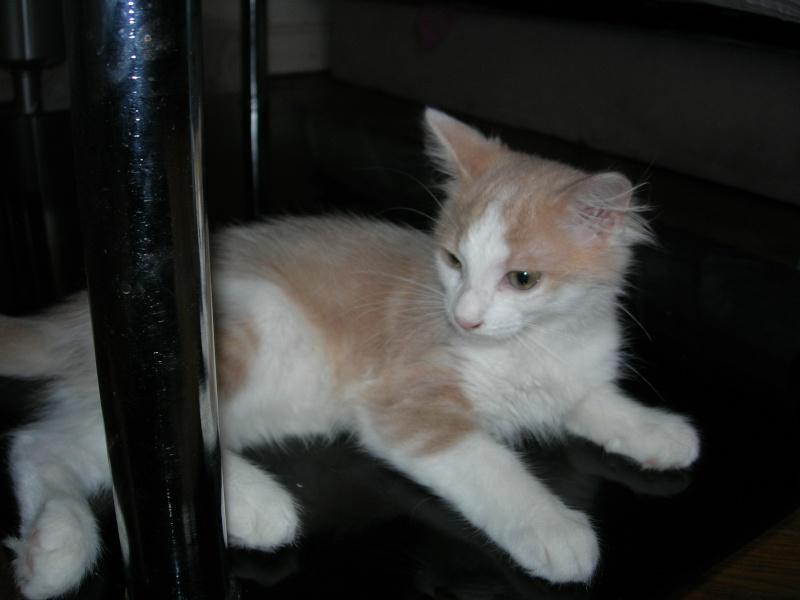 ( ADOPTE) 1 chaton mâles poils mi longs 3 mois et demi chatéki04 Nice (06)  Dscn5427