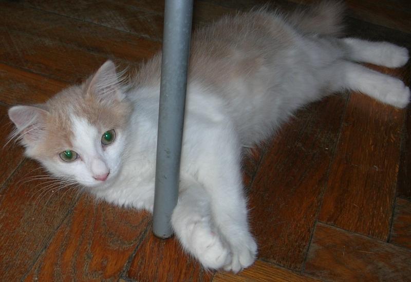 ( ADOPTE) 1 chaton mâles poils mi longs 3 mois et demi chatéki04 Nice (06)  Dscn5428