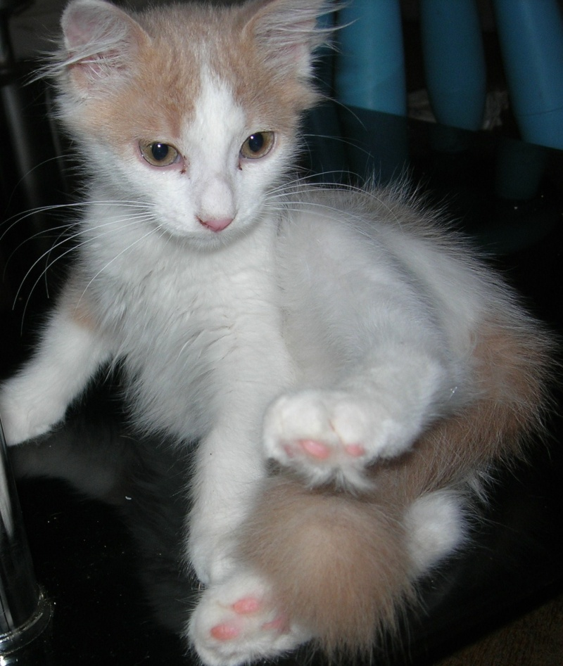 ( ADOPTE) 1 chaton mâles poils mi longs 3 mois et demi chatéki04 Nice (06)  Dscn5430