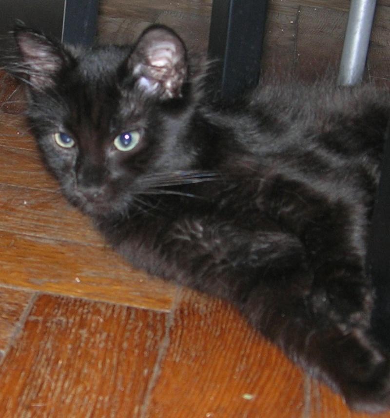 ( ADOPTE) 1 chaton mâles poils mi longs 3 mois et demi chatéki04 Nice (06)  Dscn5431