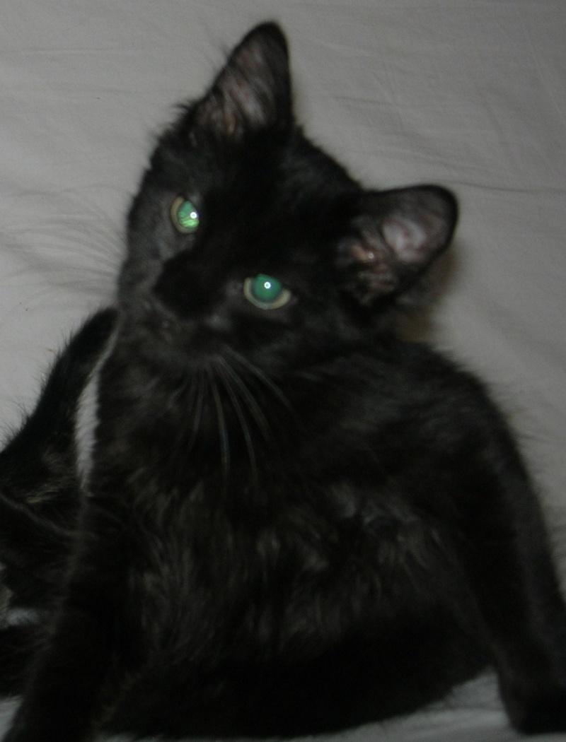 ( ADOPTE) 1 chaton mâles poils mi longs 3 mois et demi chatéki04 Nice (06)  Dscn5432