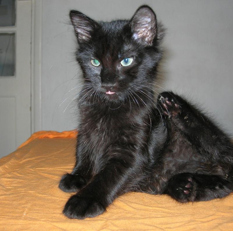 ( ADOPTE) 1 chaton mâles poils mi longs 3 mois et demi chatéki04 Nice (06)  Dscn5433