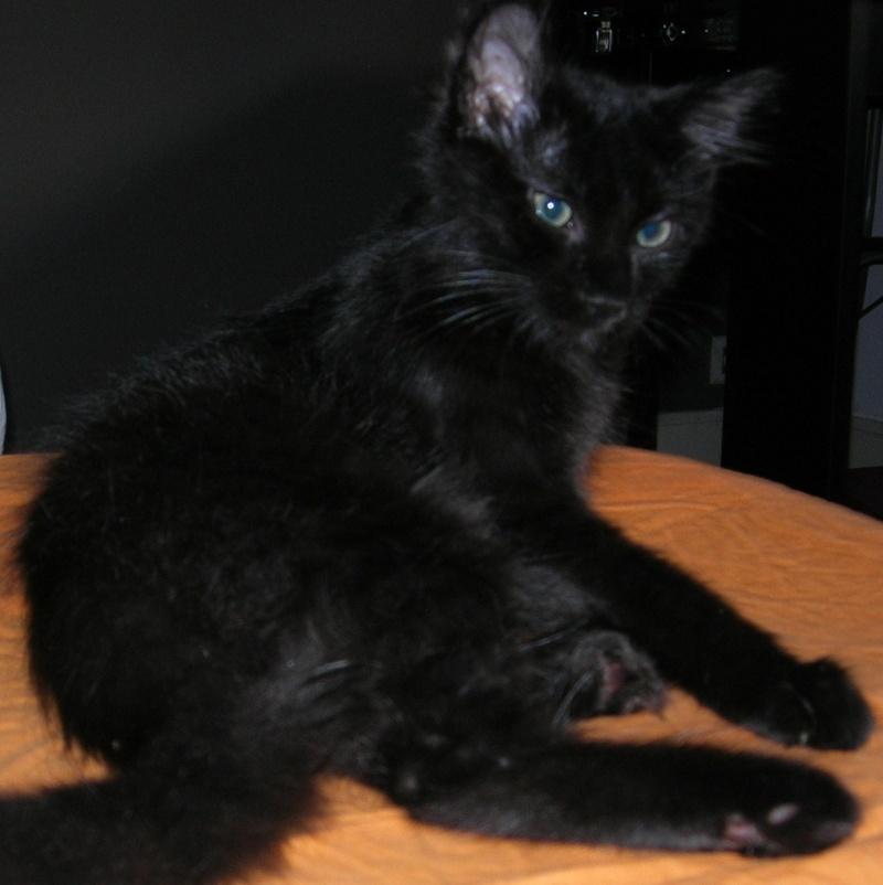 ( ADOPTE) 1 chaton mâles poils mi longs 3 mois et demi chatéki04 Nice (06)  Dscn5434