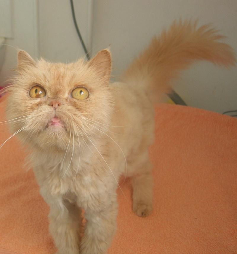 ( Adoptée) Luciole petite persanne a adopter Dscn5611