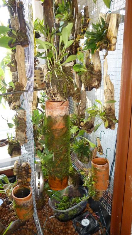 Miniatur- Orchideen - Seite 23 Vitrin10
