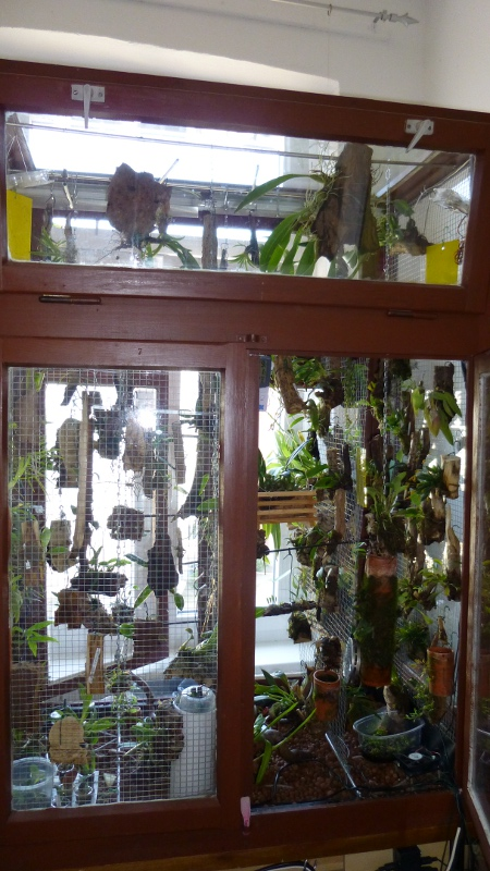 Miniatur- Orchideen - Seite 23 Vitrin11