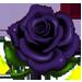Temps de pousse des différentes Graines [parcelle, serre, avec ou sans arroseurs] Rose_n10
