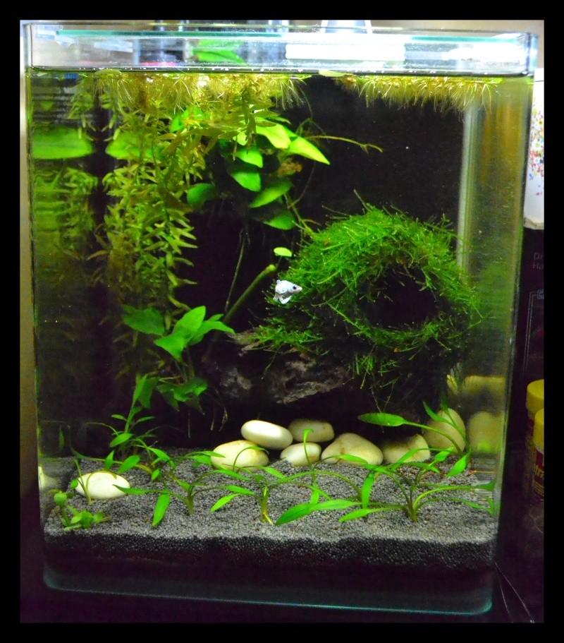 L'aquarium 20L de Sidonie 22081410