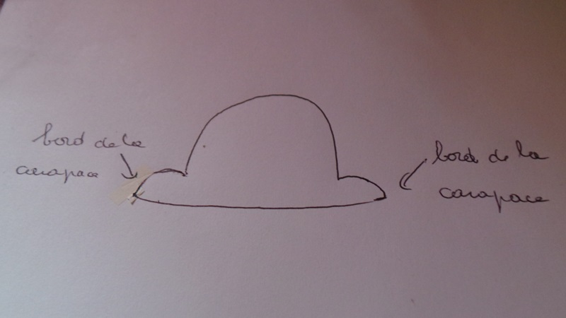 Ma tortue tobleronne 20140752