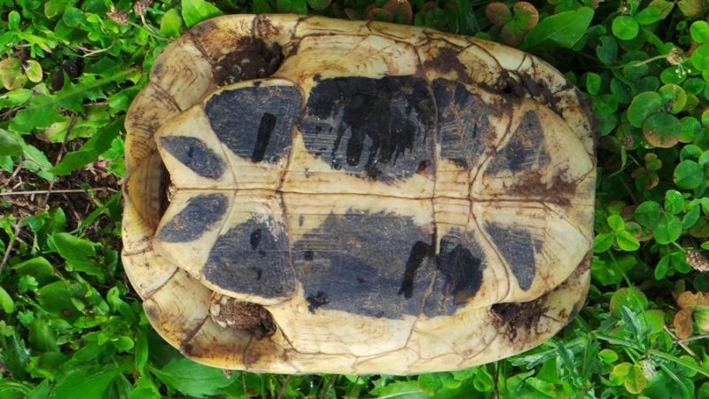 Deux tortues à identifier 20140816