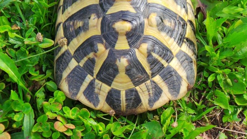 Deux tortues à identifier 20140817