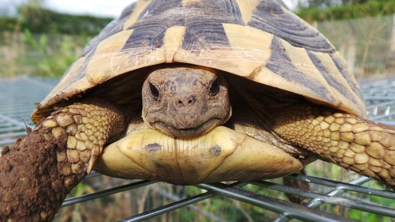 Deux tortues à identifier 20140818