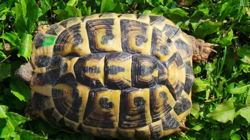 Deux tortues à identifier 20140819