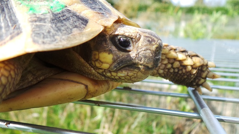 Deux tortues à identifier 20140822
