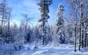 Bosque de Fresnot
