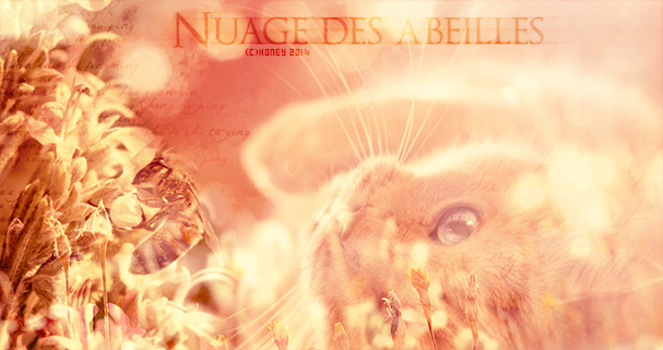 Larmes de Requiem Nuage_22