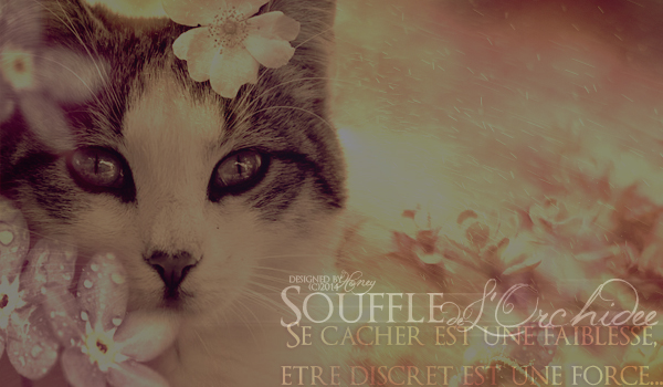 Hiw, It's me °° Souffl12