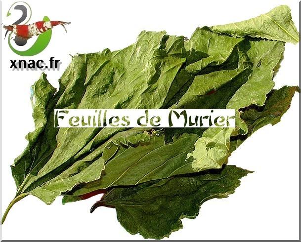 [XNAC] Feuilles de Mûrier Mulberry XL Feuill10