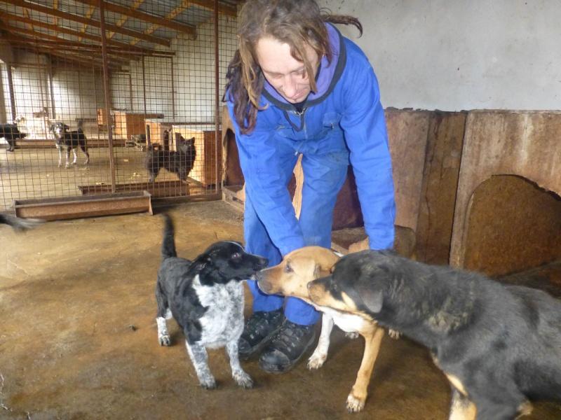 chien 39 - TAMS, M-X, taille moyenne, env. 23 kg, né 2012 (Fourrière BACKA) Pris en charge Animals Rescue No_18_10