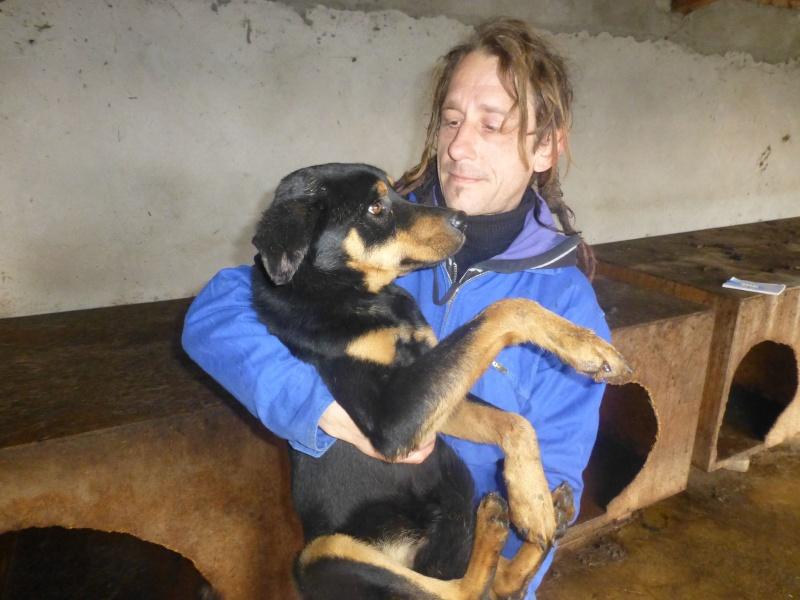 chien 39 - TAMS, M-X, taille moyenne, env. 23 kg, né 2012 (Fourrière BACKA) Pris en charge Animals Rescue No_3810