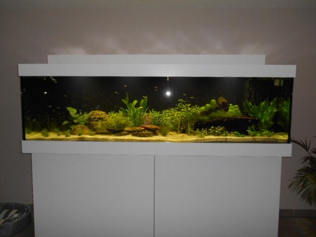 aquarium 1300 litres amazonie Dscn0137