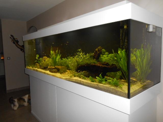 aquarium 1300 litres amazonie Dscn0138