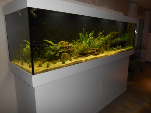 aquarium 1300 litres amazonie Dscn0139
