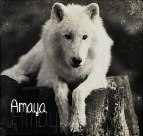 L'atelier d'un p'tit loup {2/2}  Amaya110