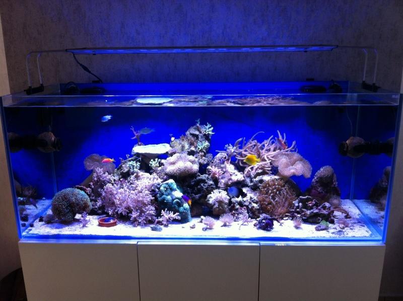 Le reef de KAZ 511