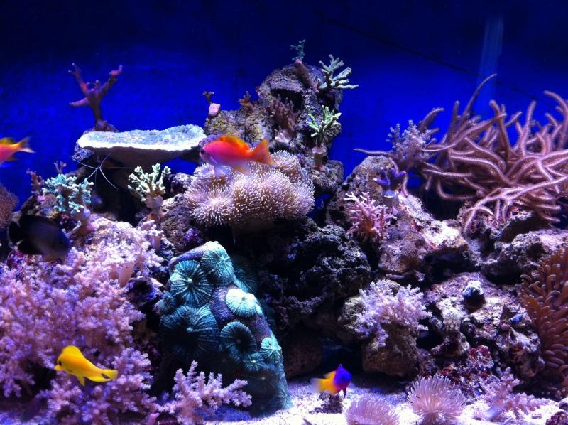 Le reef de KAZ 910