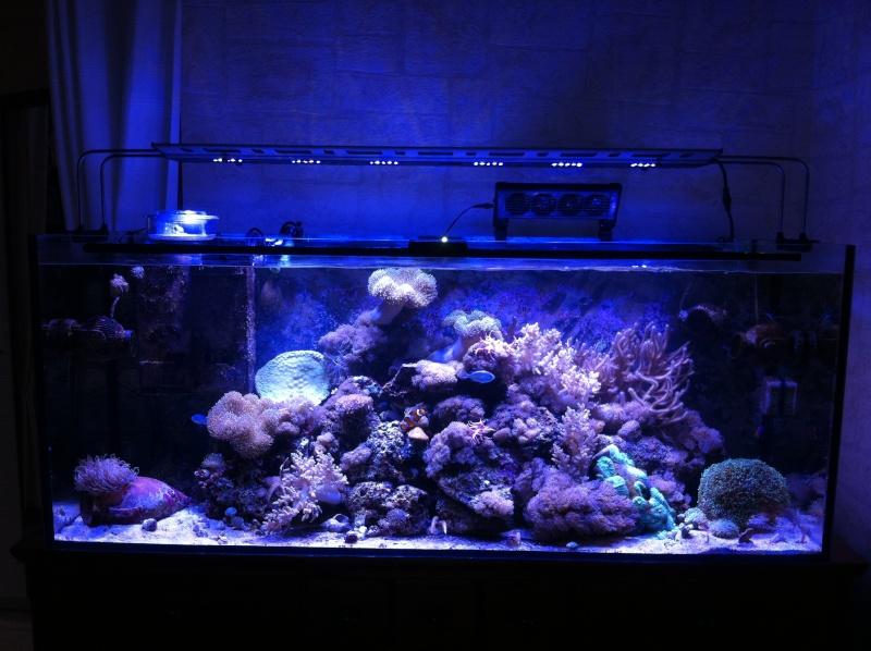 Le Reef de KAZ Img_0510