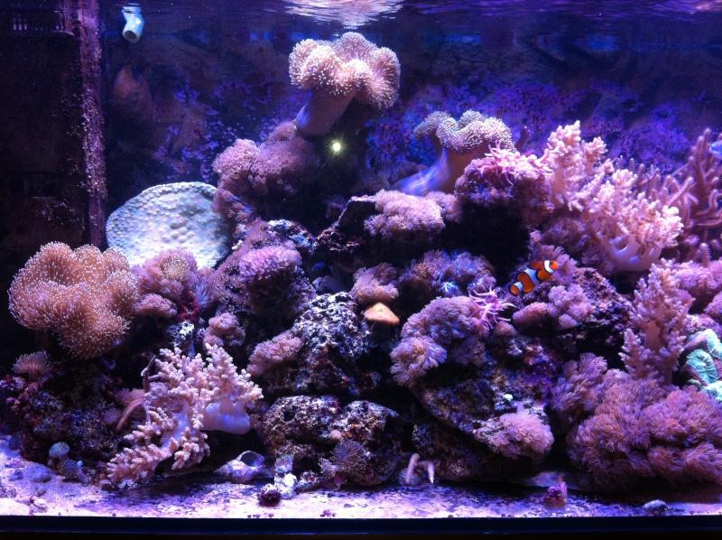 Le Reef de KAZ Img_0511