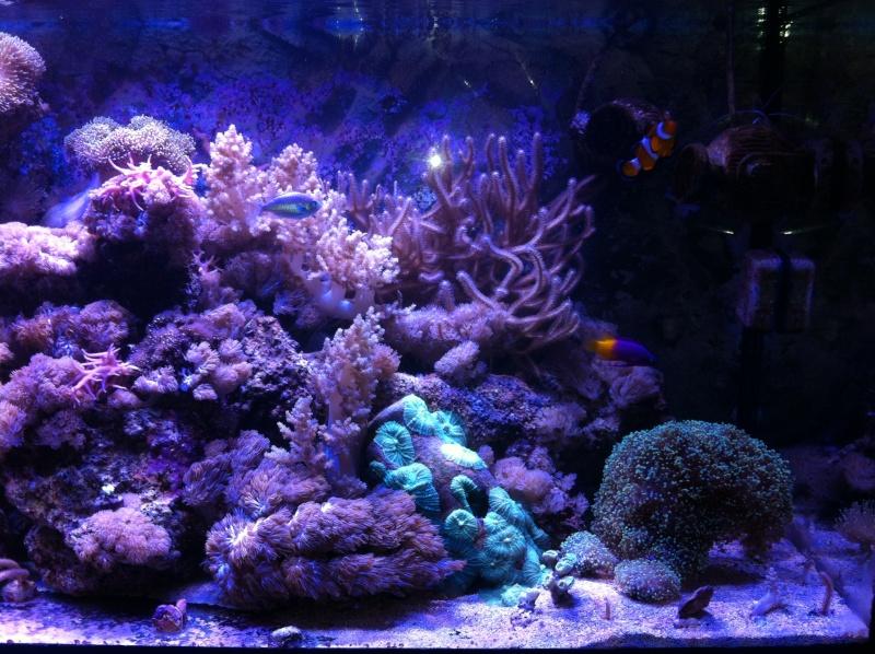 Le Reef de KAZ Img_0512