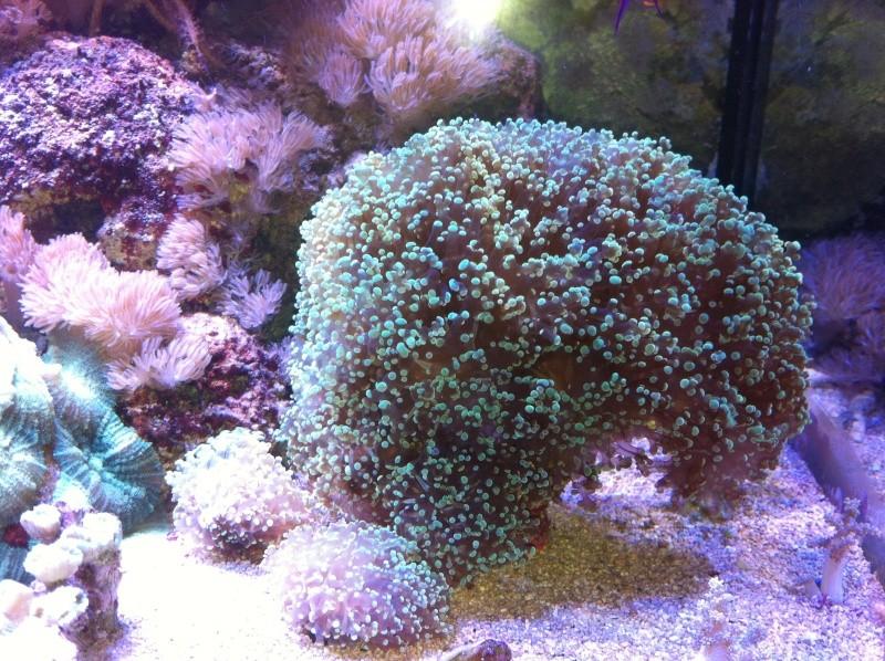 Le Reef de KAZ Img_0513