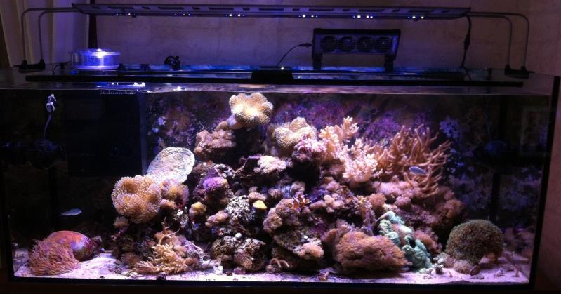 Le Reef de KAZ Img_0515