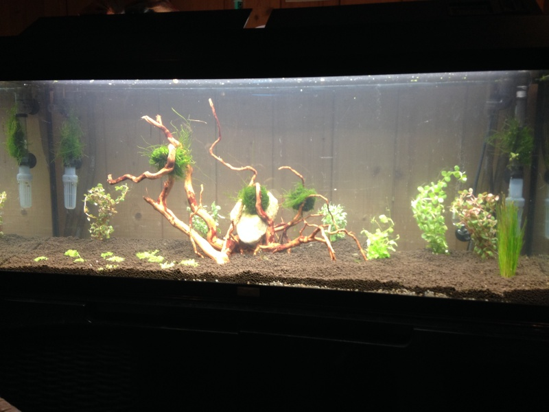 "Evolution ""Green nature tank"" V3 Img_0010"