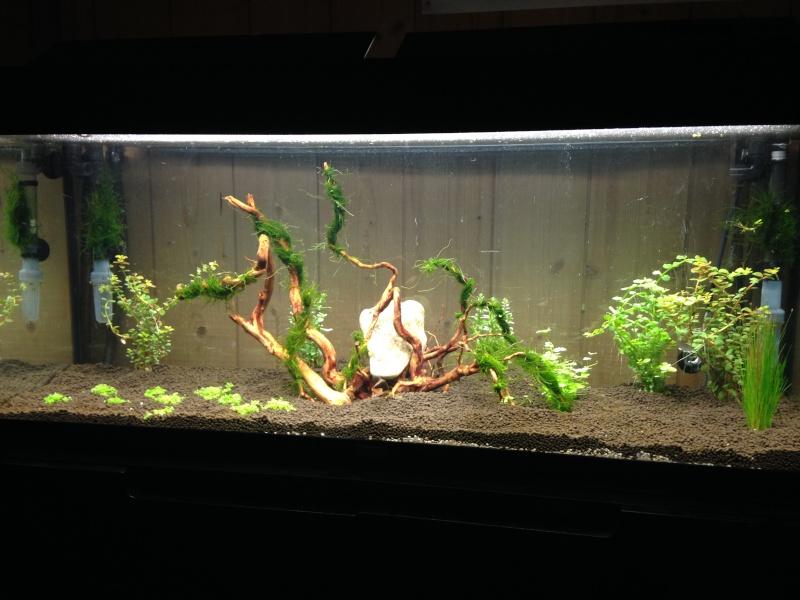 "Evolution ""Green nature tank"" V3 Img_0011"