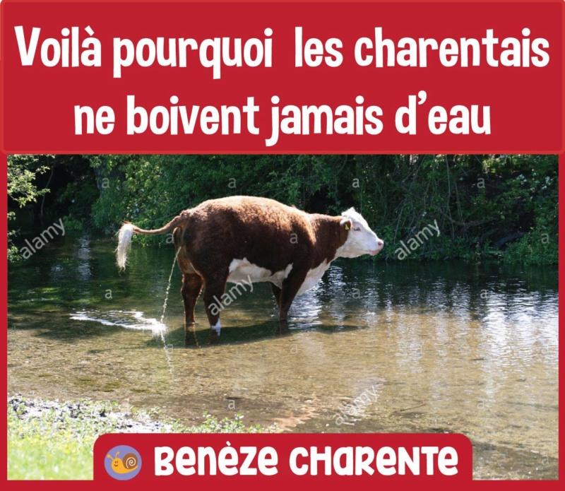 Humour du jour Vache10