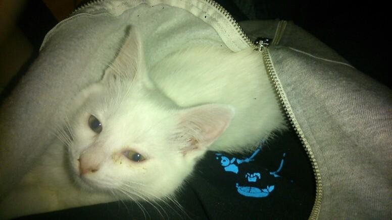 Montrez nous vos chattes :3 ( PETS ON BOARD !! )  Mms_im10
