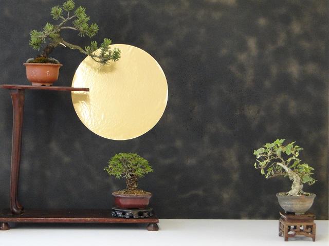 Plante en pot : Frêne  Dsc05717